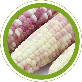 Quick frozen corn wholesale comes  the temperature  the length of freezing time