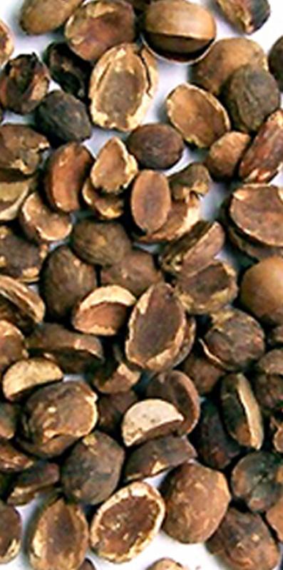 Scorn nut kernels